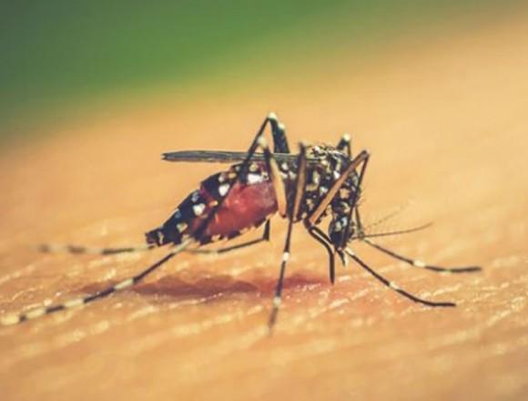 Lo que hay que saber sobre el dengue